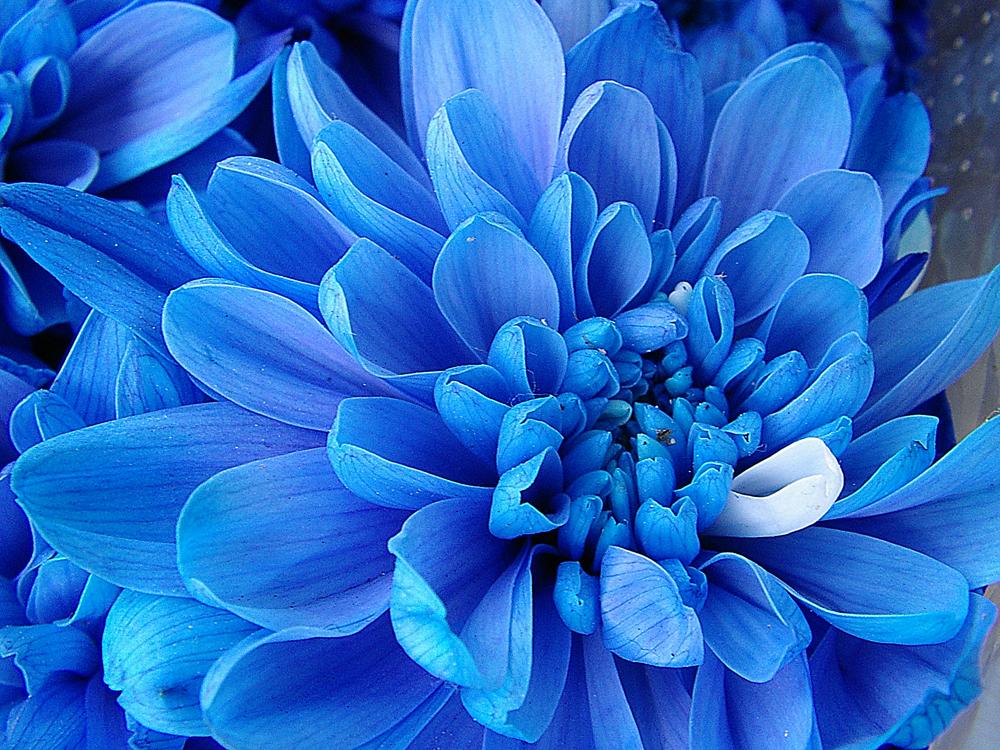 Синий цвет значение секс фото 789-633