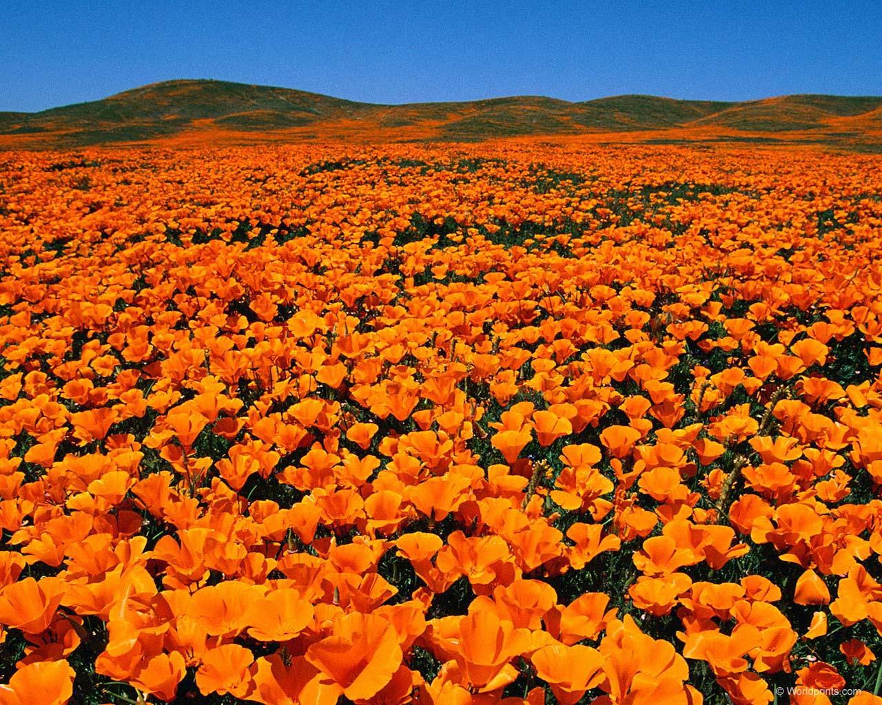 Песня про оранжевый цвет
