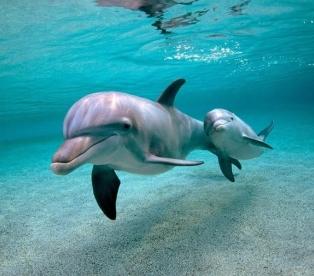 Дельфины и секс с людьми