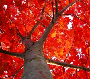 красный цвет и его значение в психологии