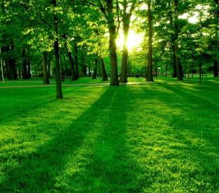 Зеленый цвет значение в психологии