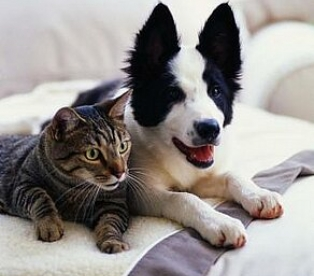 Домашние животные - практически члены семьи
