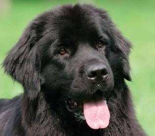 Собака - питомец и друг в одном лице