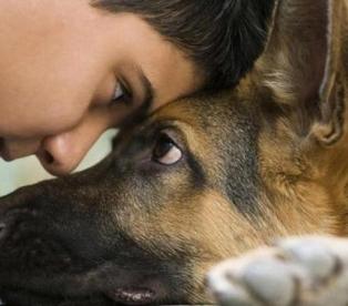 Взгляд в глаза собаке