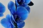 голубой цвет значение