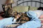кот спит в постели
