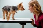 Почему считается, что нельзя смотреть в глаза собакам?