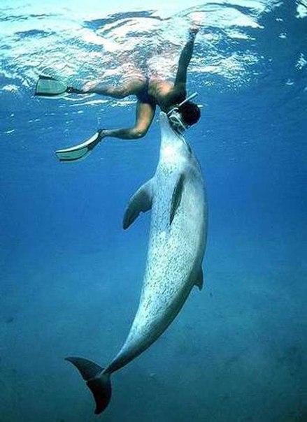 Секс в жизни дельфинов
