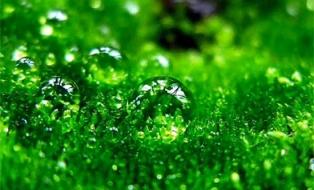 значение зеленого цвета