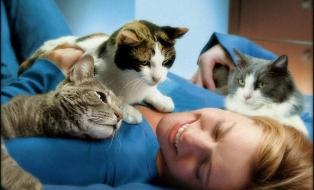 Кошки любят свою хозяйку